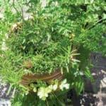 Grow Your Own Herbs | Herb Garden |