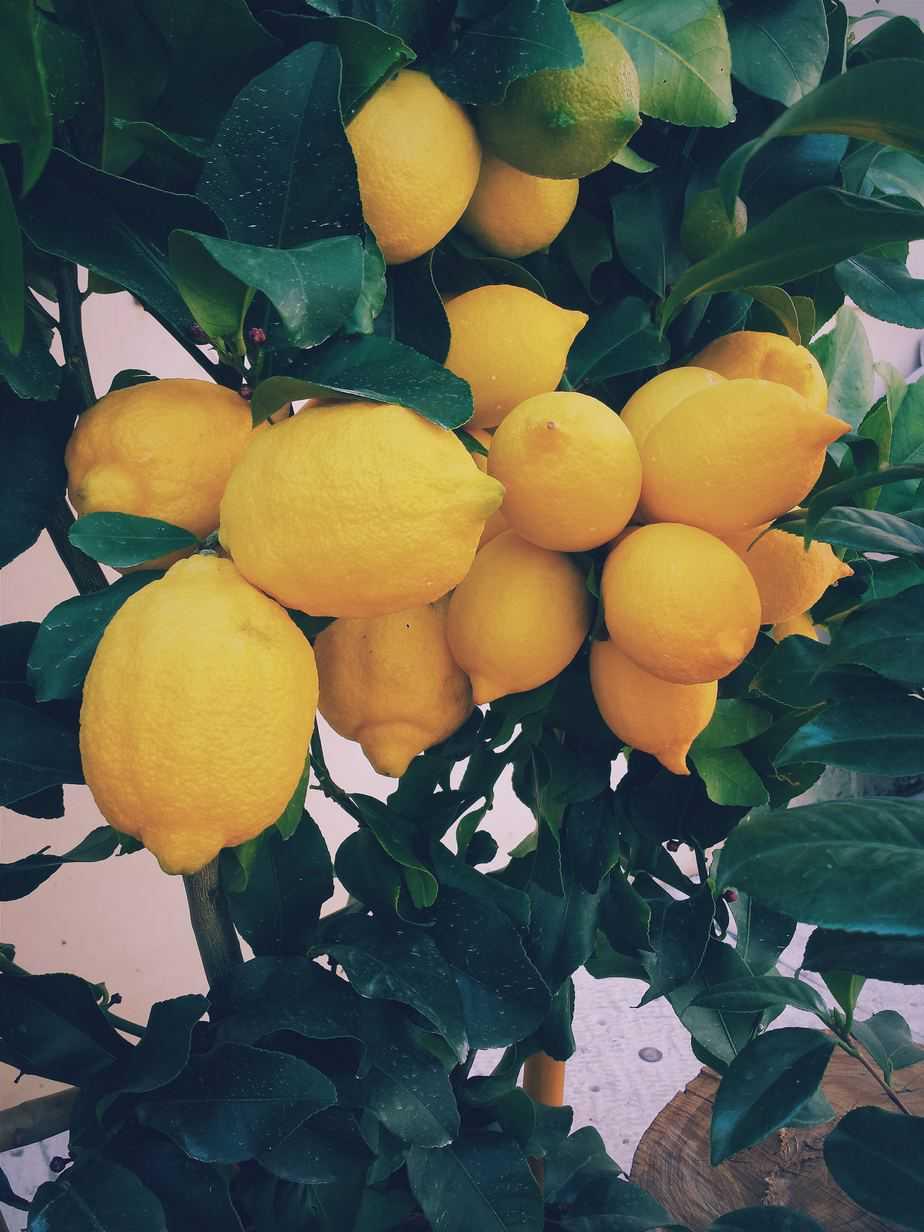 Making Preserved Lemons at Home