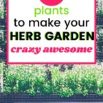 The Secret to an Herb Garden is Easier Than You Think! | easy herb garden | Setting up an herb garden is easier than you think. Learning how to grow an herb garden for use in cooking or fragrance and holistic purposes is a fun past time.